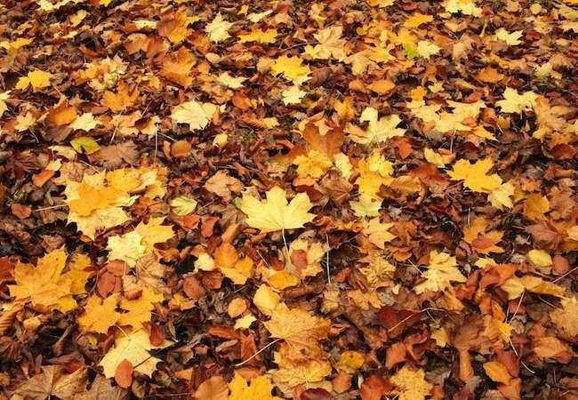 fall yard cleanup cover
