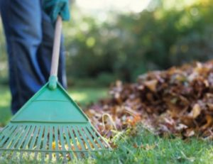 spring cleanup and lawn care